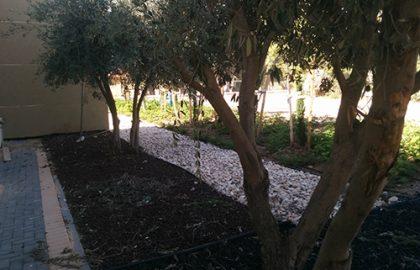 מועדון נוער וחורשת אקליפטוס – מושב נועם